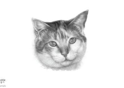 cat-pet-portrait