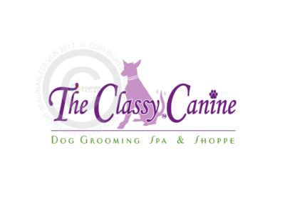classy-canine